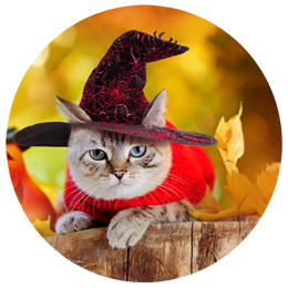 Cute Halloween costume for your cat.