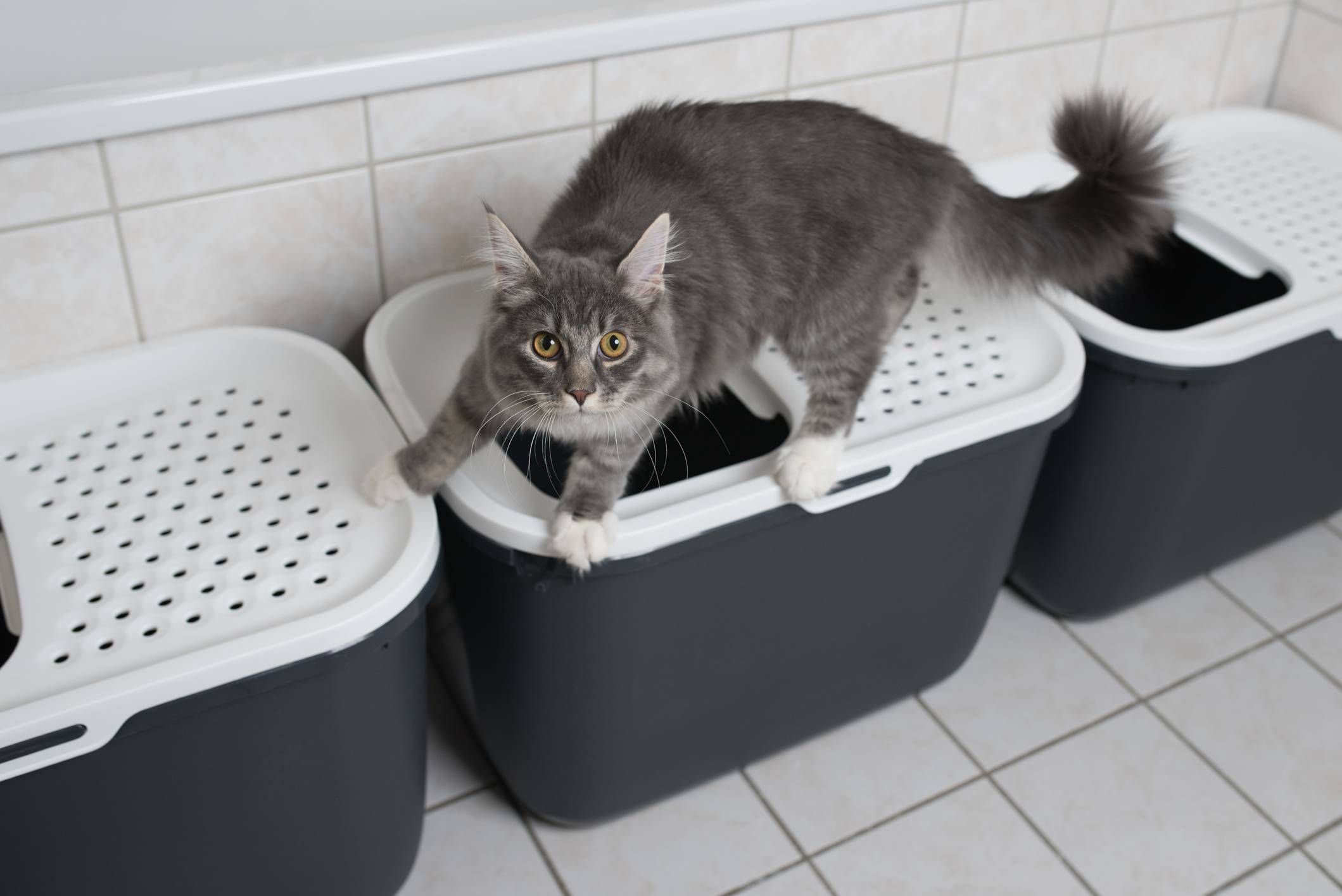 Where & How to Set Up a Litter Box | Arm & Hammer Cat Litter