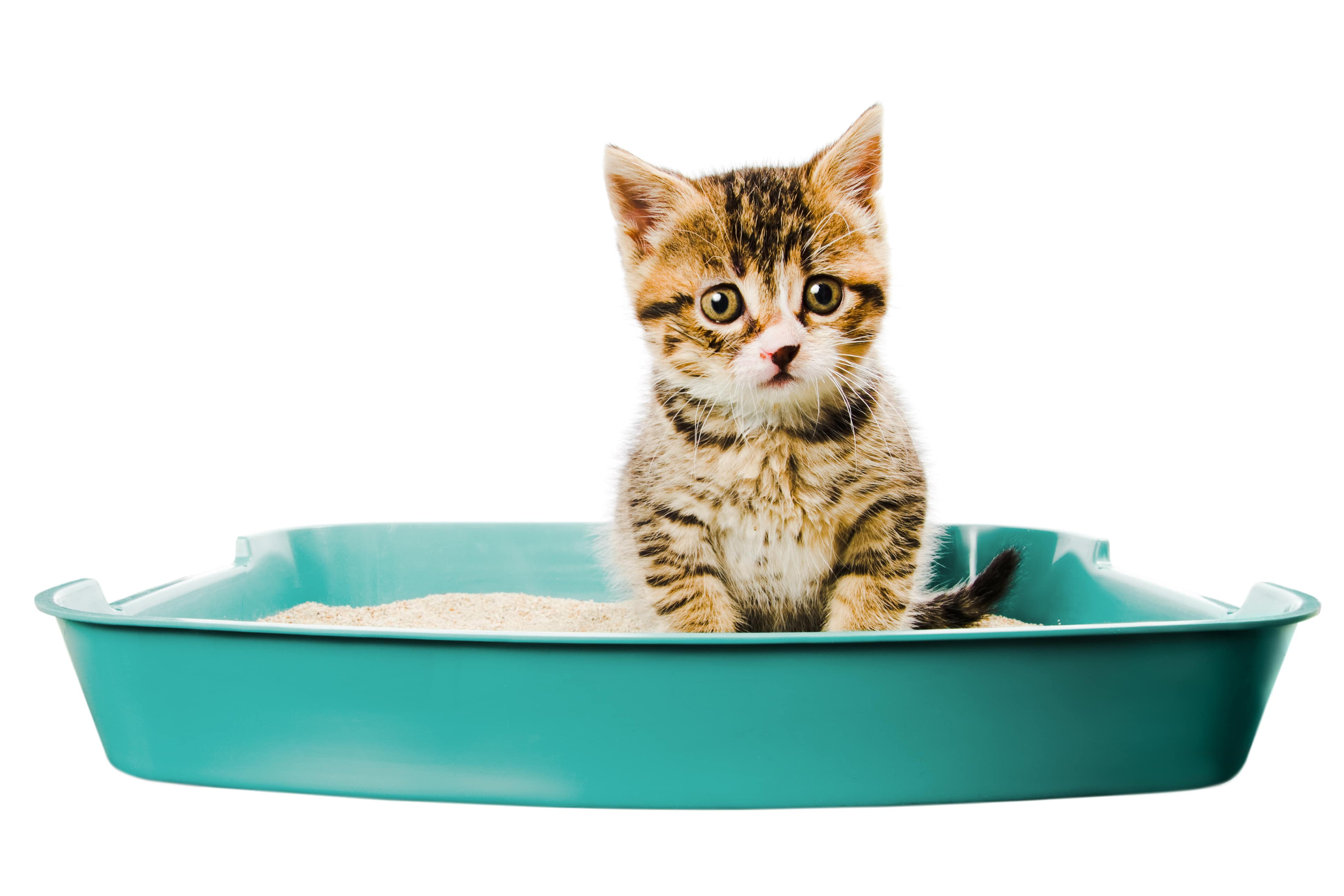 How to Avoid Litter Box Odours